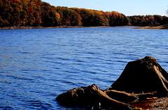Rocky Gorge Reservoir II (baltoskins) Tags: autumn trees fall water colors canon 50mm october dof stump rockygorgereservoir