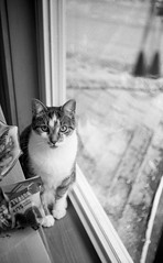 Tucker (Photofidelity) Tags: blackandwhite test film cat 35mm kitty filmcamera tucker cameratest balda selfprocess 45mmlens baldessa1b germanmadecamera