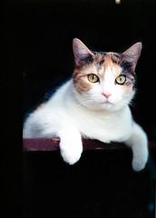 Anca 645 (Kurayba) Tags: test canada slr 120 film cat dark 645 feline edmonton fuji pentax nps kitty alberta calico roll fujifilm medium format 75 f28 anca 160 pentaxa