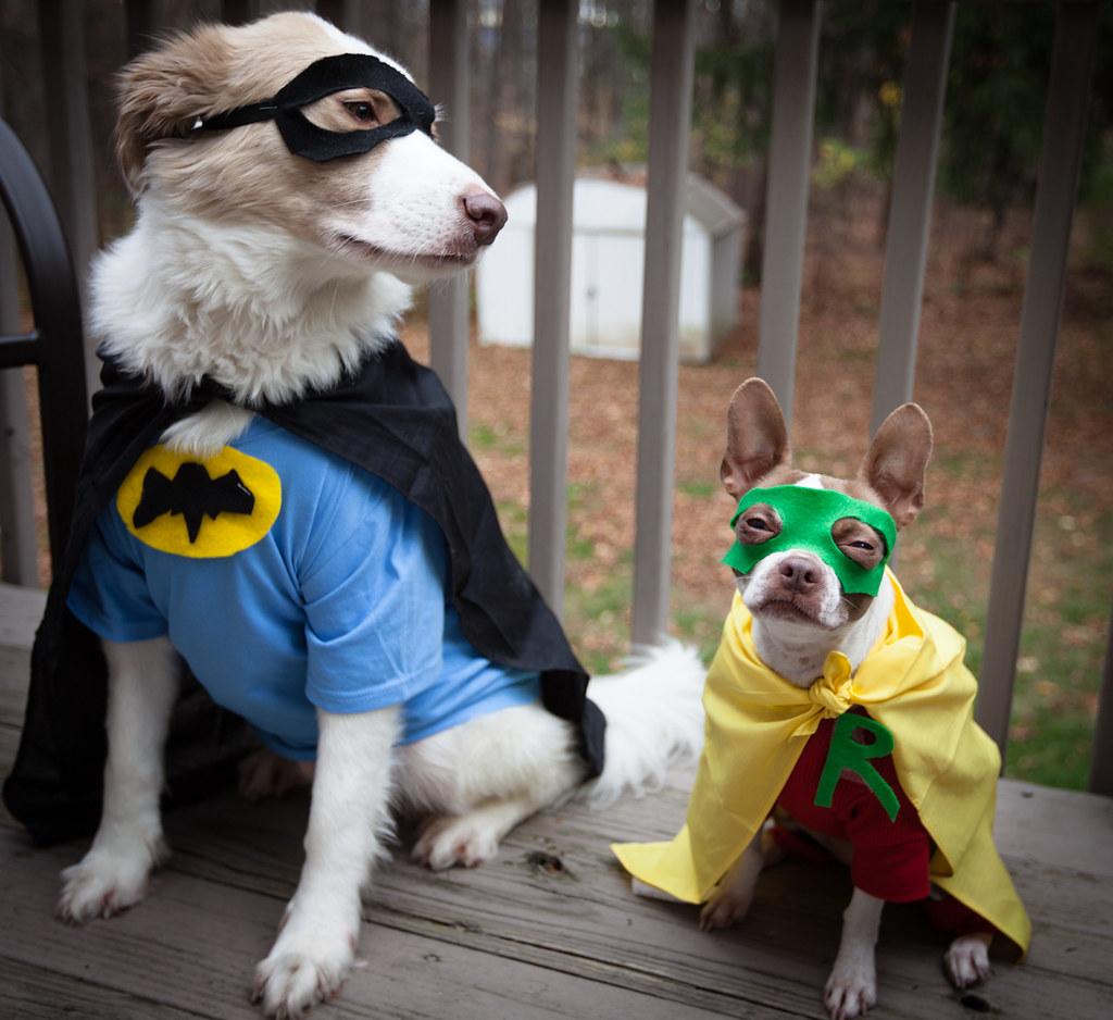 Batdog amp; Robin (giuseppetornielli) Tags dog dogs halloween robin canon costume mask
