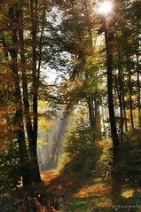 Un instant dans la fort d'automne (Excalibur67) Tags: autumn trees nature forest automne landscape nikon lumire herbst arbres paysage d90 vosgesdunord forts