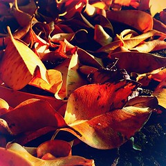 #dry #leaves #afternoon #sun (Raul Wong Roa) Tags: square squareformat iphoneography instagramapp uploaded:by=instagram foursquare:venue=4b0c4827f964a5206b3a23e3