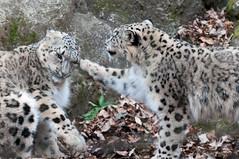 (GenJapan1986) Tags: 2013       zoo japan tokyo  animal nikond90