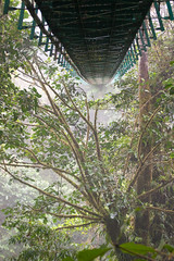 Hanging Bridge at Monteverde Cloudforest (edwindejongh) Tags: costarica jungle hangingbridge monteverdecloudforest nevelwoud