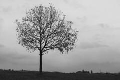 Tree (Thomas_Stone) Tags: white black monochrome landscape nikon loneliness minimal gradient 1855mm d90