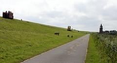 Lorry to Oland on the dike (tillwe) Tags: sheep dagebll dike lorry tillwe 201608