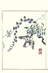 Japanese wisteria and light-vented bulbul (Japanese Flower and Bird Art) Tags: flower wisteria floribunda fabaceae bird lightvented bulbul pycnonotus sinensis pycnonotidae toko okada nagasaki woodblock picture book japan japanese art readercollection