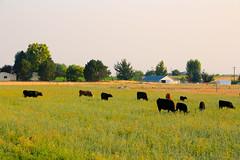 MELBA-OWYHEES-11 (Gerry Slabaugh) Tags: melba idaho gerryslabaugh farming country
