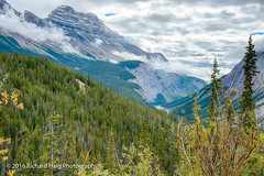 Looking south along Icefields Parkway (RichHaig) Tags: lookingsouth trees landscape nikonafsnikkor2412014ged alberta mountains icefieldsparkway canada richhaig gitzotripod nikond800 clouds