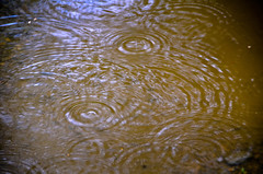 Think It Might Rain Today (Rebeak) Tags: rain puddle water circles actionrebeak alaska
