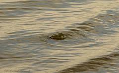 Lake Svityaz (Natali Antonovich) Tags: parallels fish drawing svityaz lakesvityaz lake reflection belarus motherlandbelarus water mystery secret atmosphere mysticalatmosphere