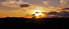 take my breadth away... (Sundornvic) Tags: shropshire sunset sun shine clouds sky pentaxart skyscenes tree silhouette fields