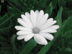 DSC00138 (I am completely lost) Tags: bw green black whit white nature flower