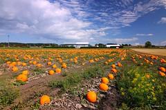 Pumpkin Time (CanMan90) Tags: saanich saanichpeninsula farms pumpkin fields michellbros vancouverisland canada britishcolumbia cans2s canon rebelt3i clouds summer september
