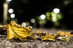 270#365 Sul Viale (Fabio75Photo) Tags: foglie autunno luci bokeh asfalto friabile fragile verde colori autunnale road marciapiede strada fresco umido secco secchezza giallo marrone colors terra stagioni viale via green yellow linfa vene
