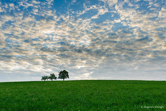 Three trees (z.dorighi) Tags: trees three poland hill green grassland meadow sky amazing couds cloudy sunset evening grass blue juicy colorful