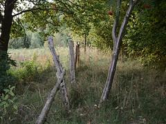 Gross-Woltersdorf_e-m10_1009247405 (Torben*) Tags: rawtherapee olympusomdem10 olympusm25mmf18 grosswoltersdorf brandenburg prignitz tree baum zaun fence