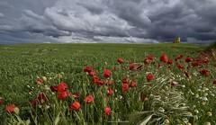 El vigia del tiempo (Anpegom fotografa) Tags: chozo amapolas primavera