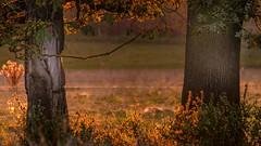 autumn 4 (Yasmine Hens) Tags: autumn saison season hensyasmine namur belgium wallonie europa aaa belgi belgia belgien  belgique blgica   belgie  belgio    bel be saariysqualitypictures