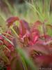 Herbst - Blätter 23.09.2012