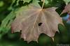 Herbst Blätter 08.10.2012