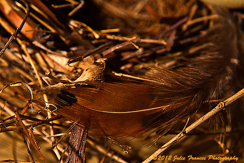 Feather on a Nest