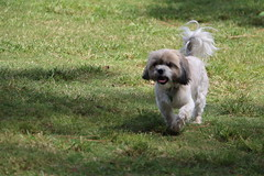 IMG_2996.JPG (highlander411) Tags: park dog orlando unitedstates florida dogpark fetch drphillips