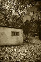 (snorri.s) Tags: autumn canon iceland leaf haust sland lauf 2011 laufbl mlakot snorris