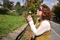 wish (Natalie Sparaccio) Tags: autumn newyork mountains fall nature wish roscoe wishing adirondackmountains wishingflower