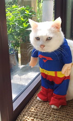 Miko the Superman....or maybe not :P