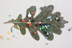 scattered settlements (virginhoney) Tags: trip vacation beach trash found leaf oak plastic ibiza bits pressed balearics