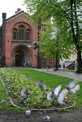 Oslo (April.Moulton) Tags: city travel flowers building birds oslo norway canon flying europe pigeons flowerbed canon350d nationalgeographic travelphotography flyingbirds captitalcity