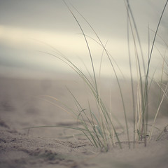 Green Beach (Morphicx) Tags: green beach beautiful grass canon5d canon50f14 oostkapelle