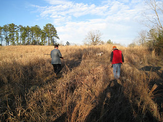 Private Alabama Quail Hunting - Davis Quail 19