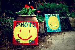 Photo is ok! Smile! (Nuuttipukki) Tags: flowers signs smile copenhagen denmark explore smiley dnemark kopenhagen christiania pusherstreet photoisok
