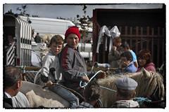 Two lads at a horse fair (Frank Fullard) Tags: street portrait horse boys candid fair jockey mates ballinasloe fullard frankfullard