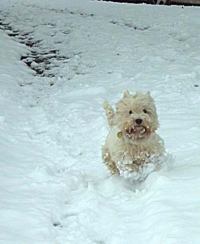 Charlie running in the snow