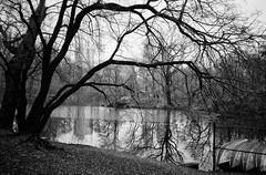 Lake Reflections (CVerwaal) Tags: trees winter analog reflections centralpark ishootfilm oldschool ilfordxp2 sanremo olympusxa thelake
