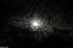 Branches (Hosam AL-Hwid) Tags: trees light sky sun white black dark branches sony saudi arabia a77 hosam alhwid