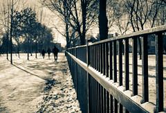 January Farewell (Loco_Ono) Tags: toronto hff trinitybellwoodspark fencefriday olympusep2 lumix14mmf25