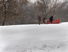 Winter sleigh mood (Pavel K) Tags: winter horse snow russia moscow snowfall kolomenskoye nikond7000