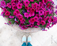 everyday is the start of something beautiful (moudhiya) Tags: pink flowers blue flower color colors photo amazing photographie photograph kuwait channel tiffanyblue  q8