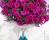 everyday is the start of something beautiful (moudhiya) Tags: pink flowers blue flower color colors photo amazing photographie photograph kuwait channel tiffanyblue صور q8 جديد يوم الوان الكويت الحياة كويت وردي ازرق