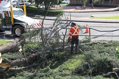 Maitland City Library, N.S.W. (maitland.city library) Tags: maitland newsouthwales city library garden tree storm damage removal 480 high street