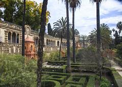 Alcazar Gardens (Hans van der Boom) Tags: europe spain vacation holiday seville sevilla alcazar palace gardens garden trees hedges green sp