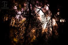 In the Wood (Thomas TRENZ) Tags: austria d5100 nikon simmering sonnenuntergang tamron thomastrenz vienna wald forest iamnikon licht light sonenstrahlen sunset warm wien wood sterreich