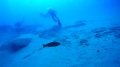 Las mojarras de los Burros (AAcero) Tags: buceo diving almera cabodegata isub