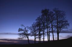 Tree Siloutes (Wood-Finishes-Direct.com) Tags: trees tree silhouette sunset beautiful dramatic nikon nikkor dark light exposure