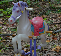 And Then There Was Another (BKHagar *Kim*) Tags: bkhagar horse pony plastic bounce toy herd yard outdoor outside garden elkriver limestonecounty al alabama riversong