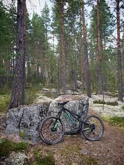 Afternoon Biking 4 (pjen) Tags: santacruz mtb finland nature forest fall carbon fullsuspension nordic boreal maastopyörä pike 275 650b kashima trail stones rocks lichen autumn vpp bicycle bike 2x11 5010 5010cc